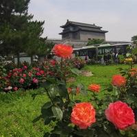 市花扮京城