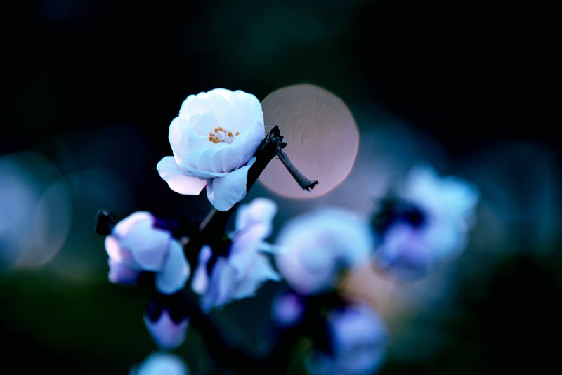 紫竹院小景