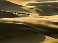 内蒙库布齐----沙漠驼影!