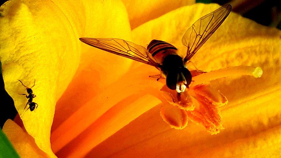 2016-08-22 花。蜂。蚁_副本.jpg