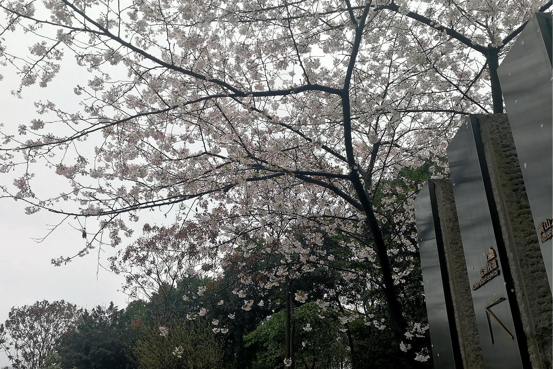 IMG_20190315_110344_副本.jpg