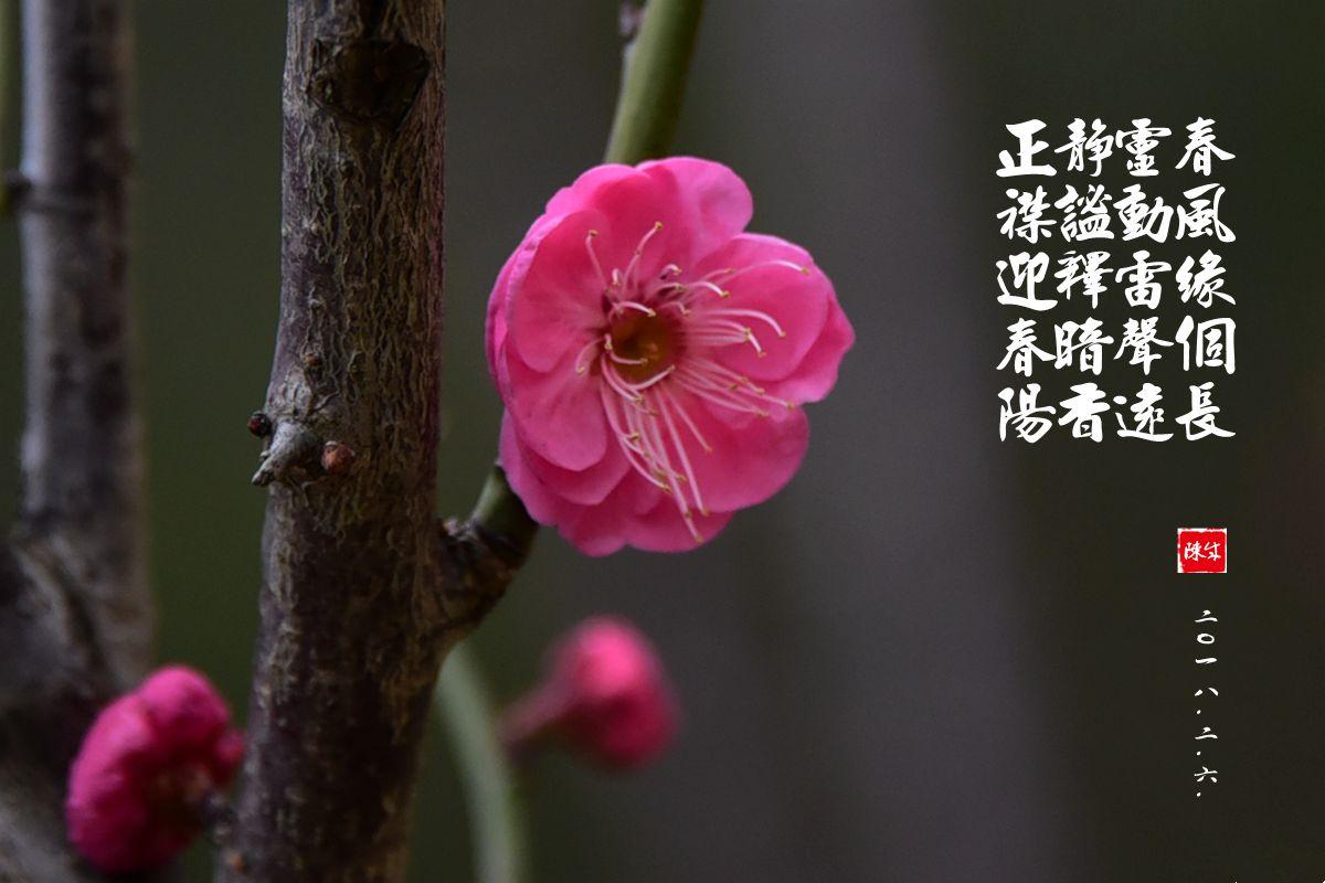 1 DSC_1955_副本_.jpg