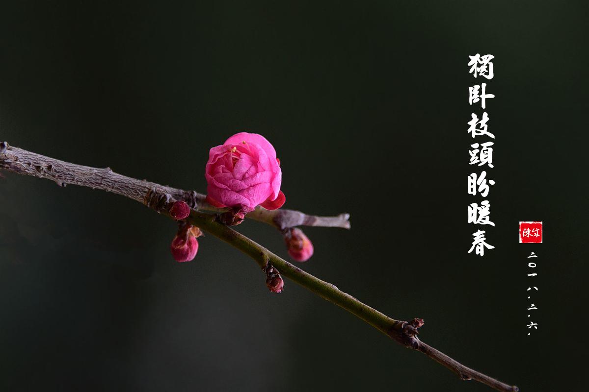 2 DSC_1963_副本.jpg