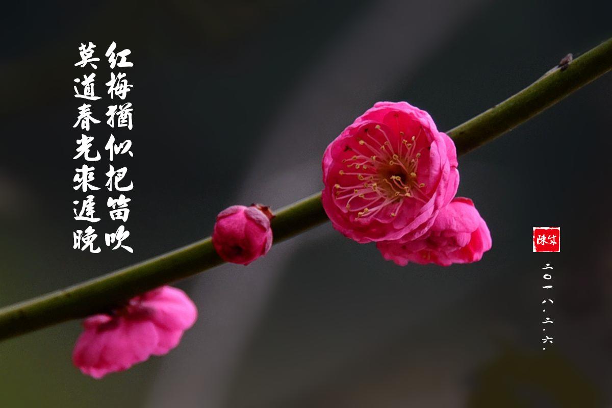 3 DSC_1966_副本_.jpg