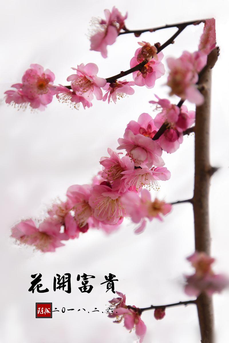 8 DSC_1984_副本_.jpg