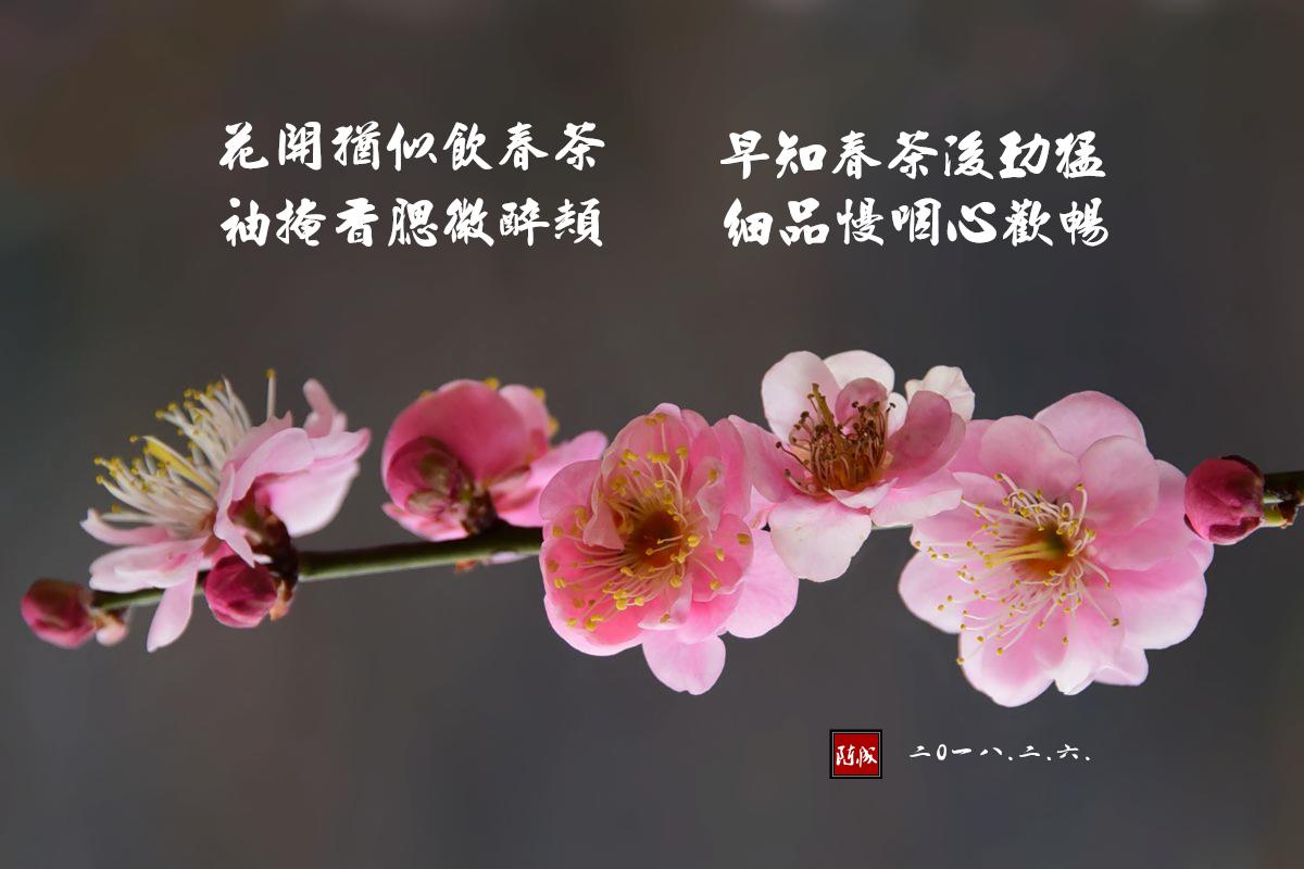 12 DSC_1993___副本.jpg