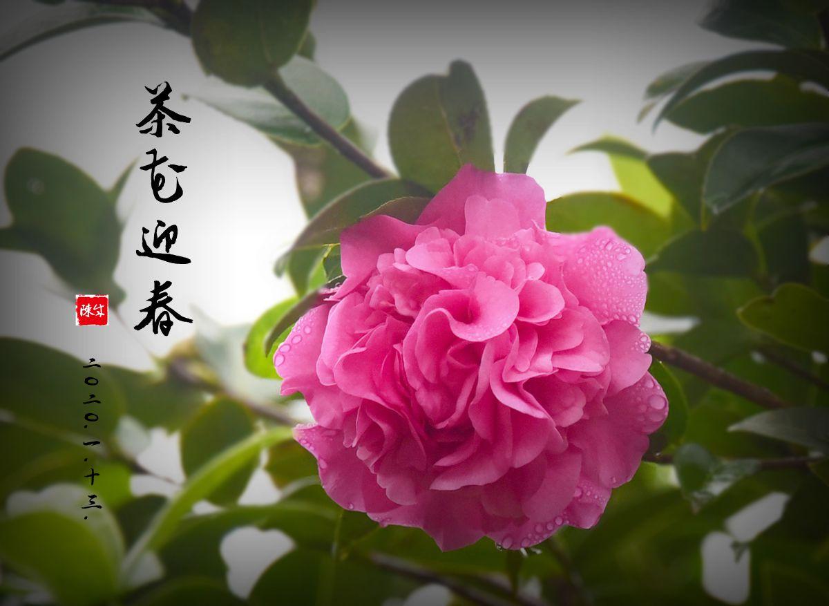 1 DSC_0306_副本.jpg