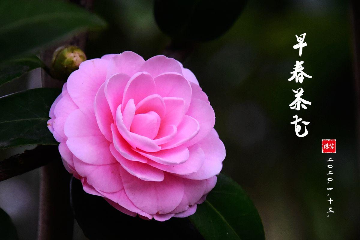 2 DSC_0310_副本.jpg