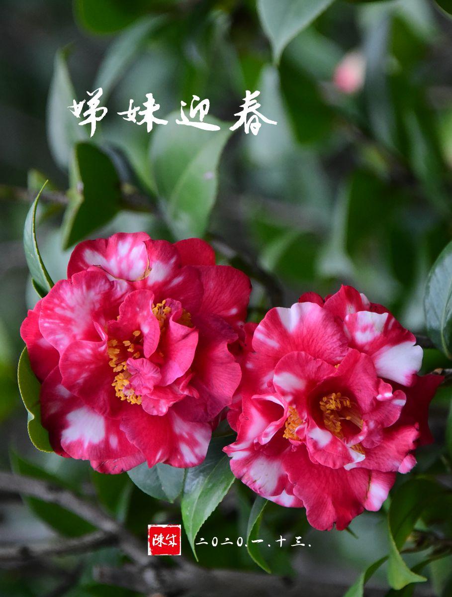 5 DSC_0335_副本.jpg