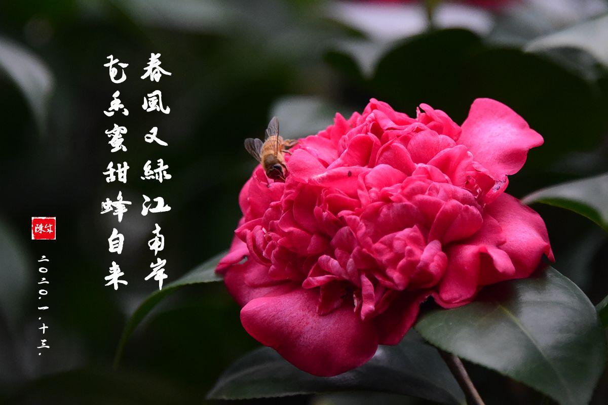 3 DSC_0315_副本.jpg