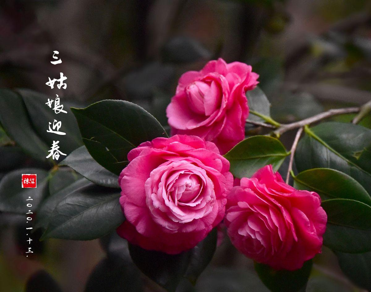 9 DSC_0356_副本.jpg