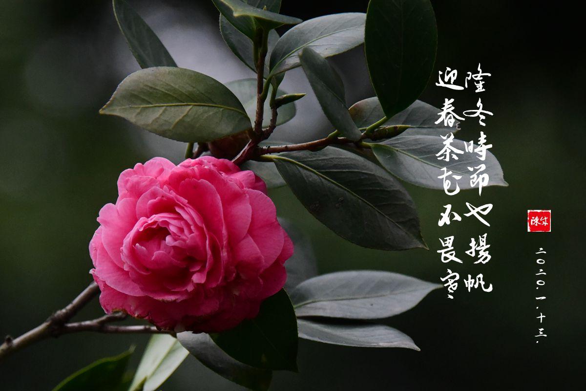 11DSC_0374_副本.jpg