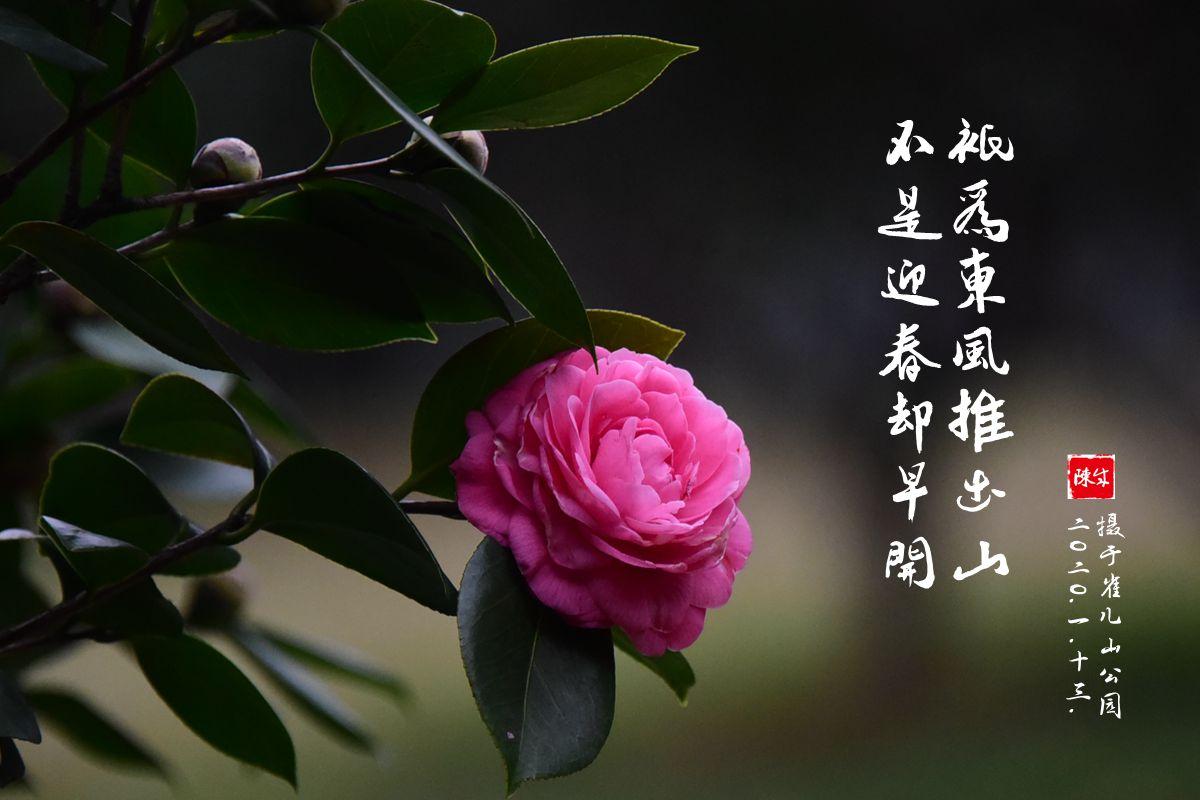 8 DSC_0355_副本.jpg