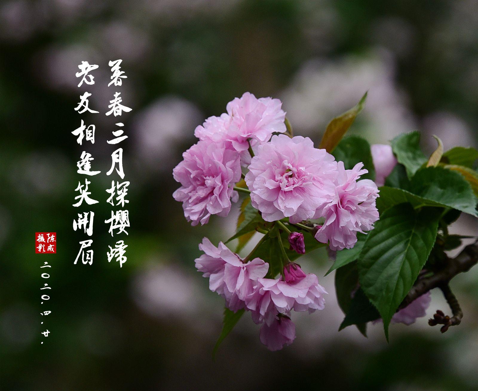 1 DSC_0734_副本.jpg