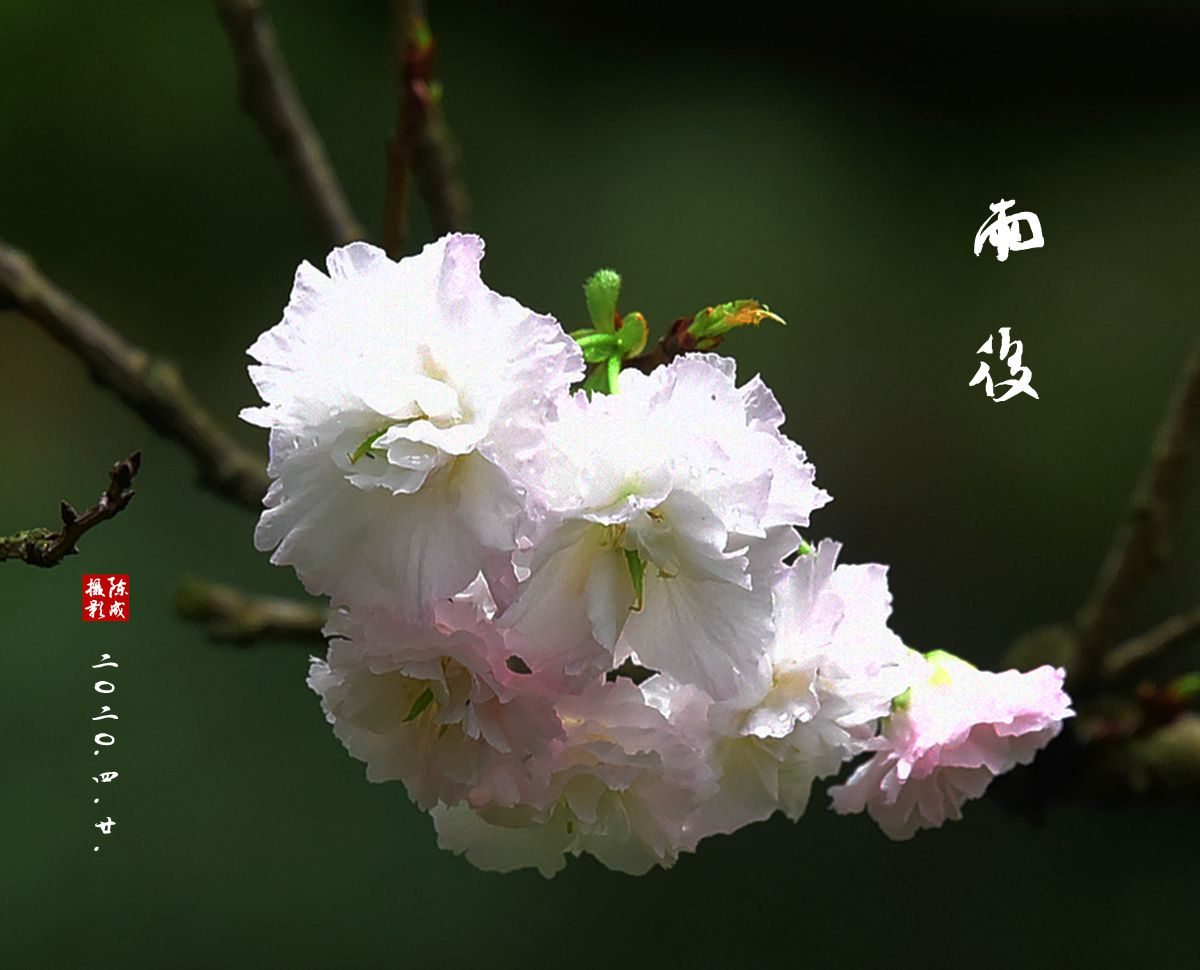 2 DSC_0752_副本.jpg