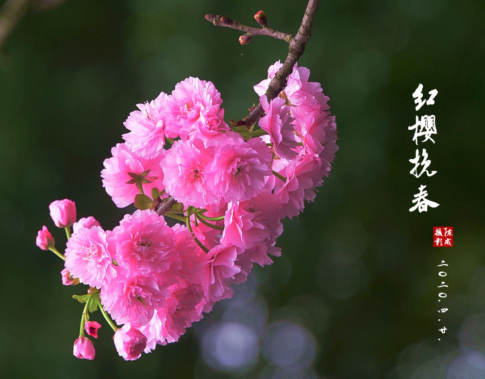 3 DSC_0778_副本.jpg