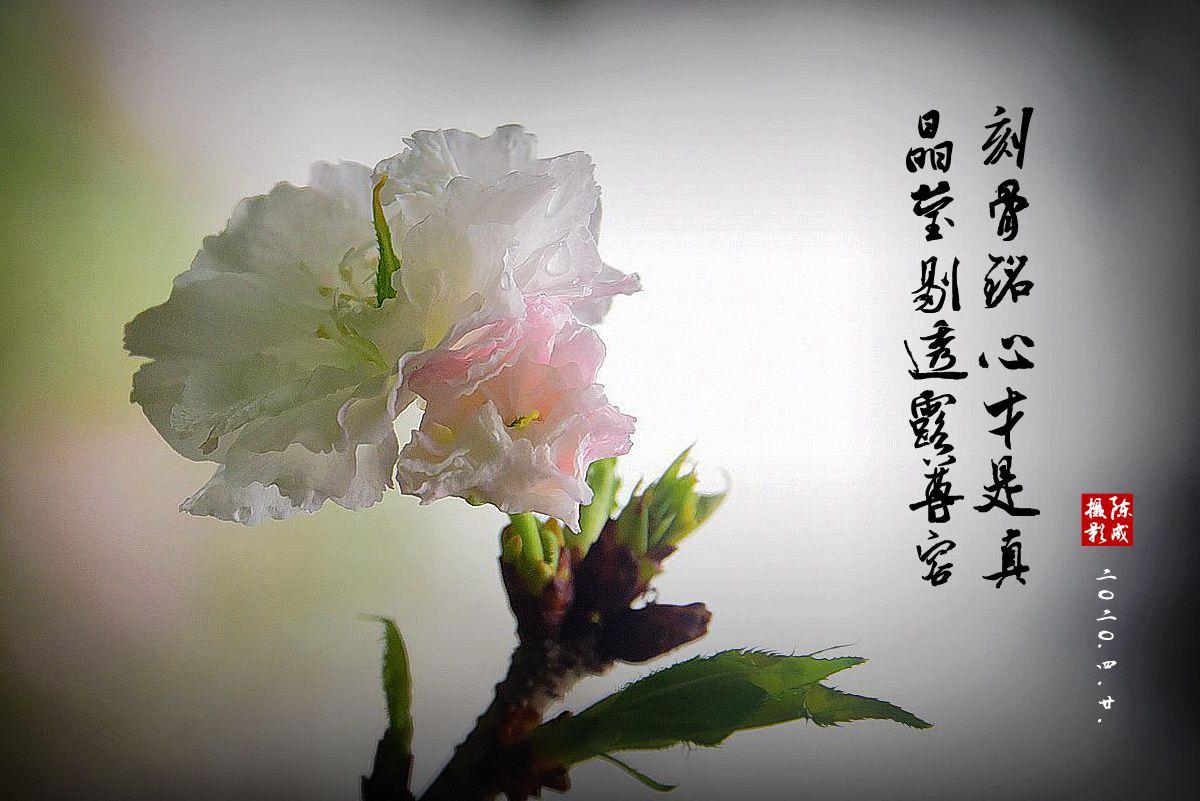 7 DSC_0799_副本.jpg