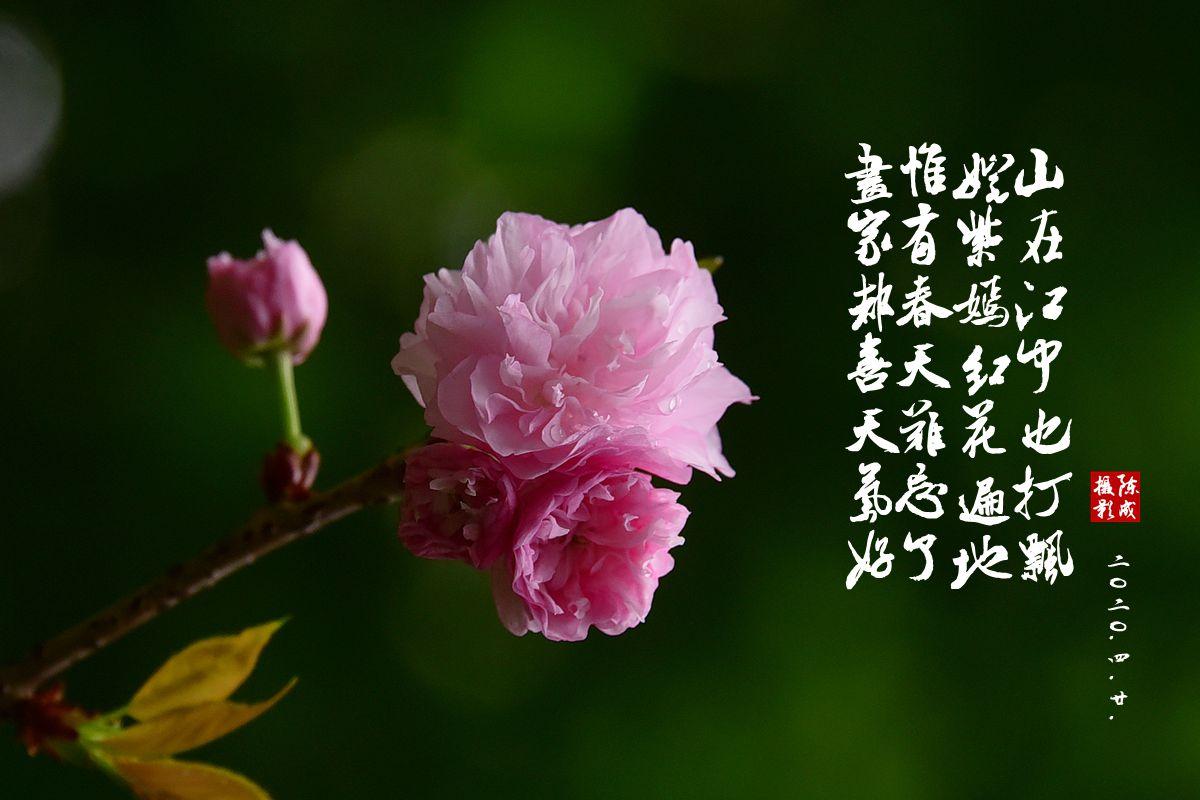 8 DSC_0802_副本.jpg