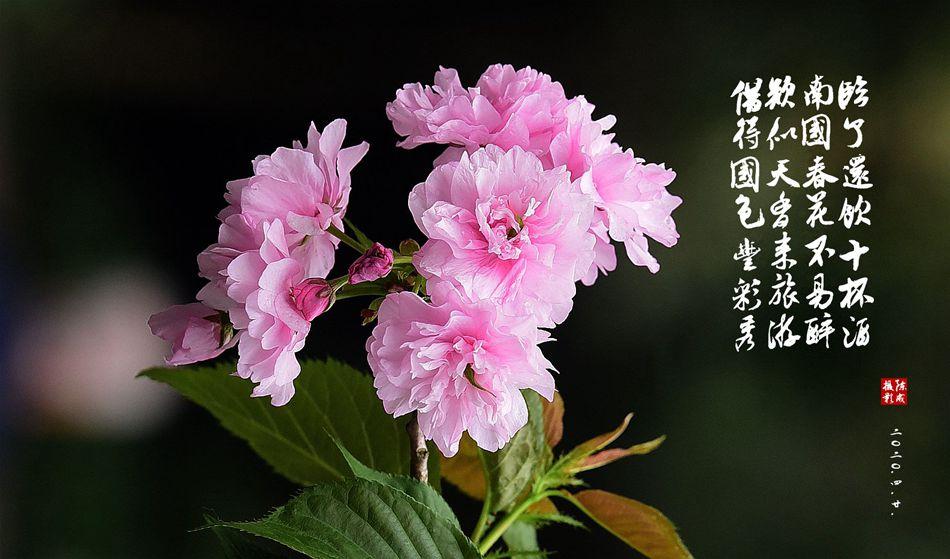 4 DSC_0779_副本.jpg
