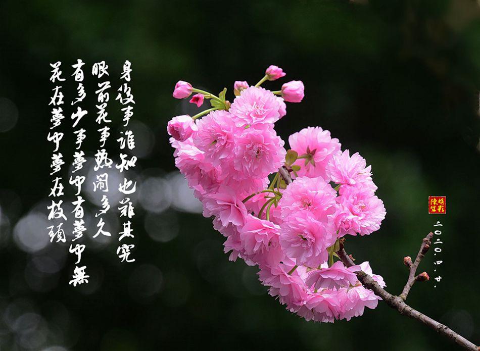 5 DSC_0780_副本.jpg