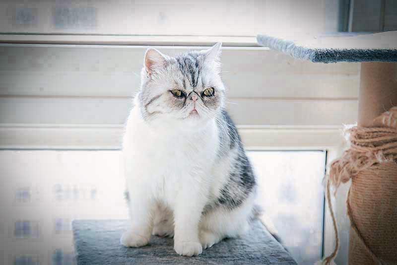 猫_MG_9570.jpg
