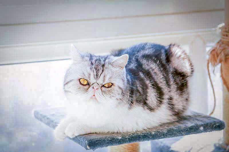 猫_MG_9586.jpg