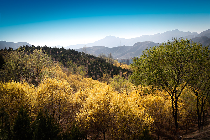 青龙湖森林公园_MG_0913.jpg