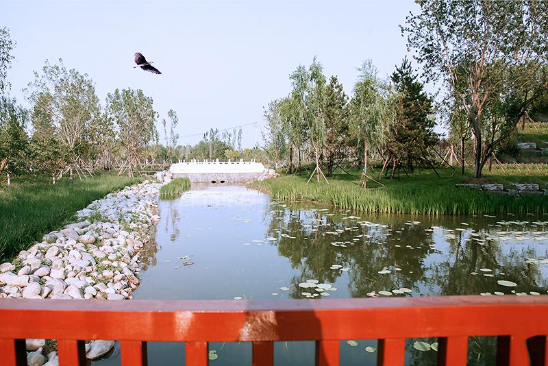 公园_MG_5812.jpg